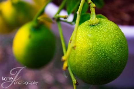 LemonTree2